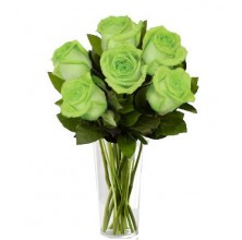 Green Royal - 12 Stems In Vase