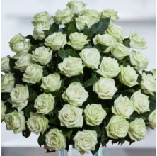 The Color of Your Day - 48 Stems In Bouquet