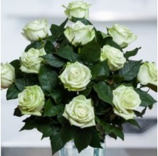 Green Royal - 12 Stems In Bouquet