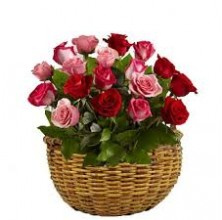 Elegant Red Pink Roses - 24 Stems Basket