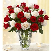 Bright Roses - 24 Stems Vase