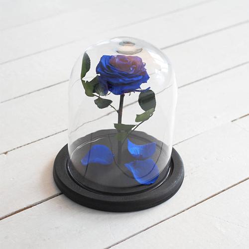 forever blue rose in glass dome. Black Bedroom Furniture Sets. Home Design Ideas