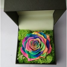 PRESERVED RAINBOW ROSE IN A BOX