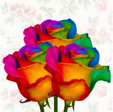 Rainbow Rose 3pc