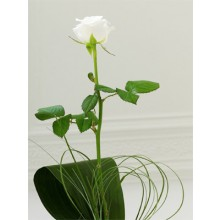 Special Someone - 1 Stem Bouquet