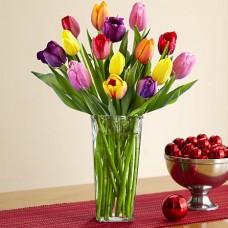 Multi Colored Tulips - 12 Stems