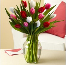 Sweetheart Tulips - 15 Stems