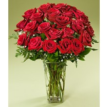Ruby Roses - 36 Stems Vase
