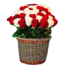 Bright Roses - 24 Stems Basket