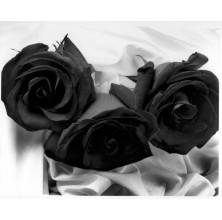 Black Flashing - 3 Stems Bouquet