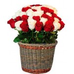 Bright Roses - 24 Stems Basket