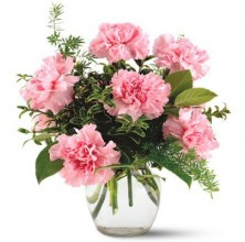 Pinkish Carnations - 6 Stems Vase