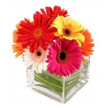 Delightful Daisies - 10 Stems Vase