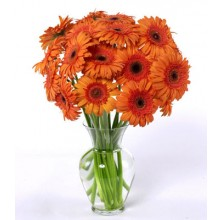 Dozen Orange Gerbera Daisies - 12 Stems Vase