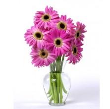 Fuchsia Gerbera Daisies - 7 Stems Vase