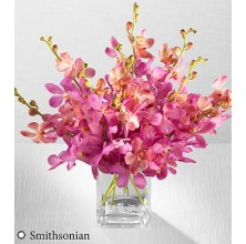 Pink Champagne Orchid - 10 Stems