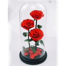 3 PRESERVED ROSES IN A GLASS DOME